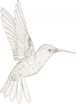 Grawerowanie rysunek koliber