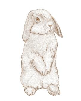 Grawerowanie rysunek królika