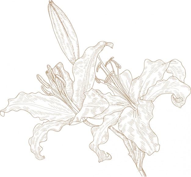 Grawerowanie rysunek kwiatu lilii
