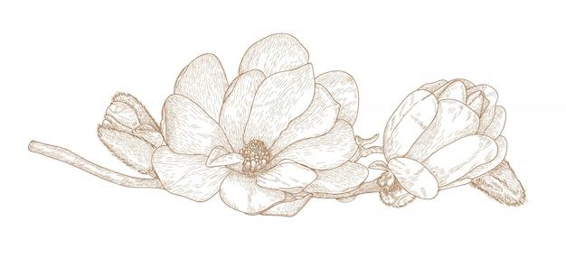 Grawerowanie rysunek kwiatu magnolii