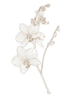 Grawerowanie rysunek kwiatu orchidei