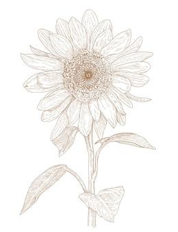 Grawerowanie rysunek kwiatu słońca