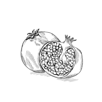 Grawerowany owoc granatu. ręcznie rysowane trawienie czarno-białych ilustracji w stylu szkicu.
