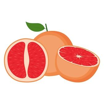 Grejpfrut, całe owoce i pół, na białym tle, ilustracji wektorowych