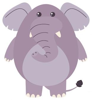 Gruby słoń na białym tle
