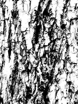 Grunge tekstury kory drzewa