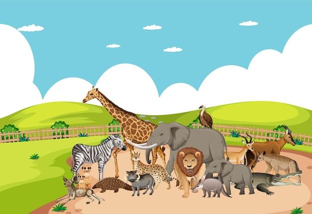 Grupa dzikich afrykańskich zwierząt na scenie zoo