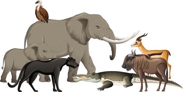 Grupa dzikich zwierząt afrykańskich na białym tle