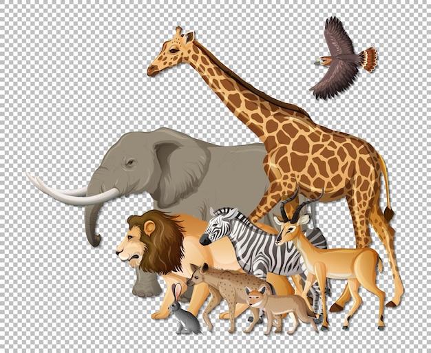 Grupa dzikich zwierząt afrykańskich na przezroczystym tle