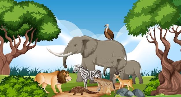 Grupa dzikich zwierząt afrykańskich na scenie leśnej