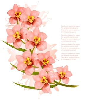 Grupa pięknych różowych kwiatów orchidei. wektor.