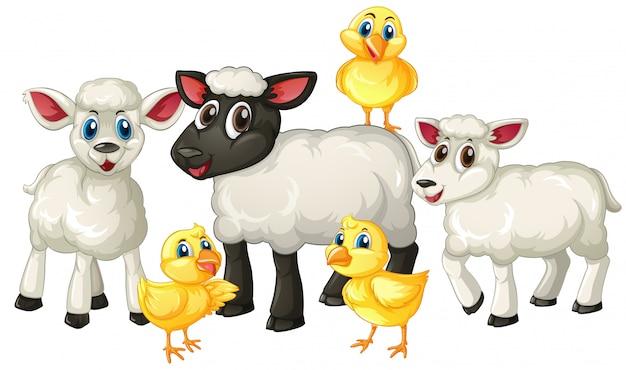 Grupa postać z kreskówki ładny zwierząt gospodarskich na białym tle