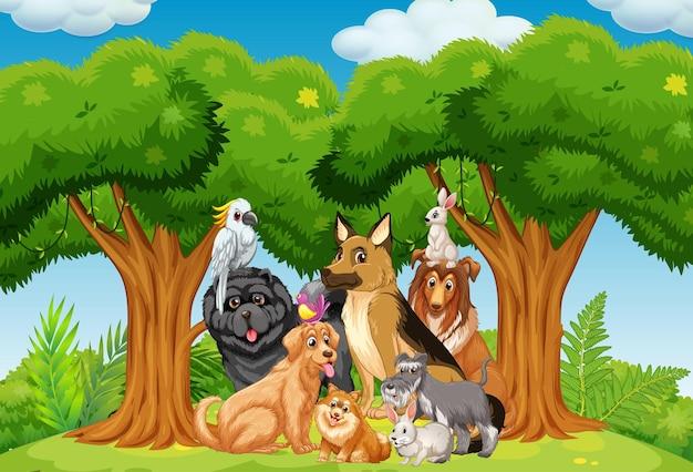 Grupa zwierząt domowych na scenie w parku