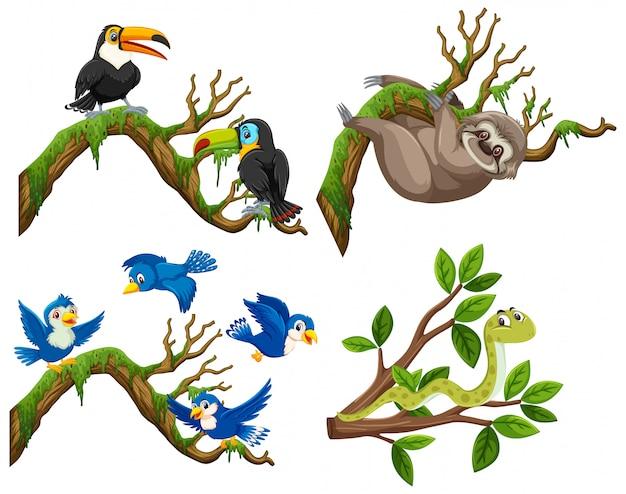 Grupa zwierząt na gałęzi drzewa