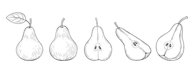 Gruszka zestaw grawerowane vintage ilustracja na białym tle. ręcznie rysowane szkic żywności ekologicznej. czarny kontur.