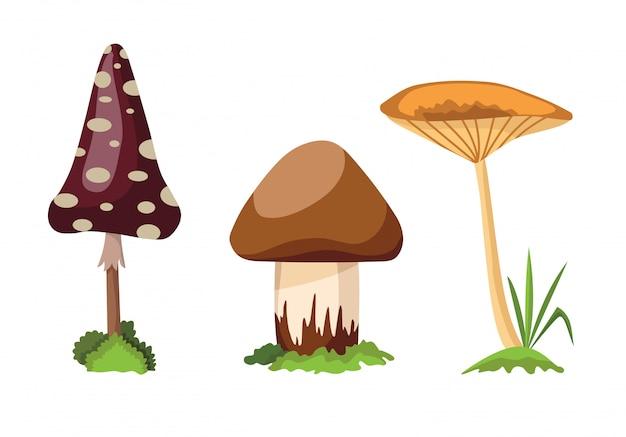 Grzyb i muchomor. ilustracja różnych rodzajów grzybów na białym tle
