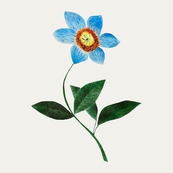 Gwiazdkowa ilustracja kwiatowa
