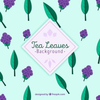 Herbacianych liści tło z roślinami