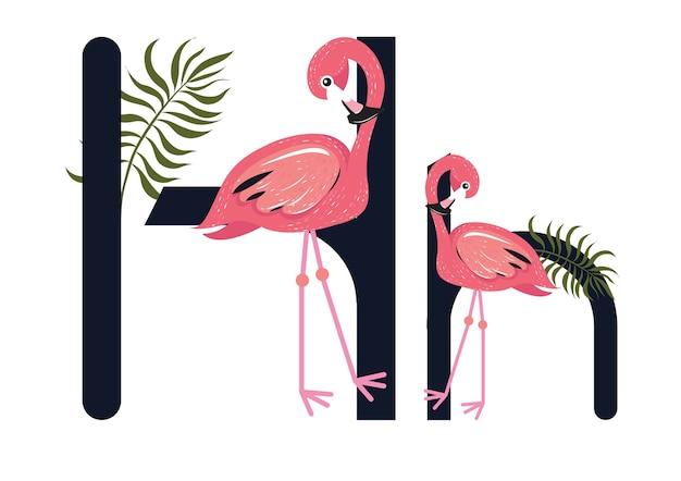 Hh flamingos