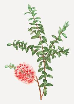 Hillock bush plant