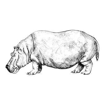 Hipopotam na białym tle. szkic graficzny zwierząt potężnej sawanny w stylu grawerowania.
