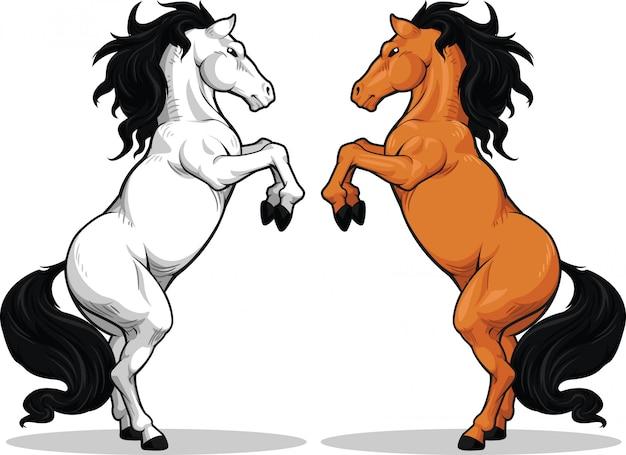 Hodowla ogiera lub konia
