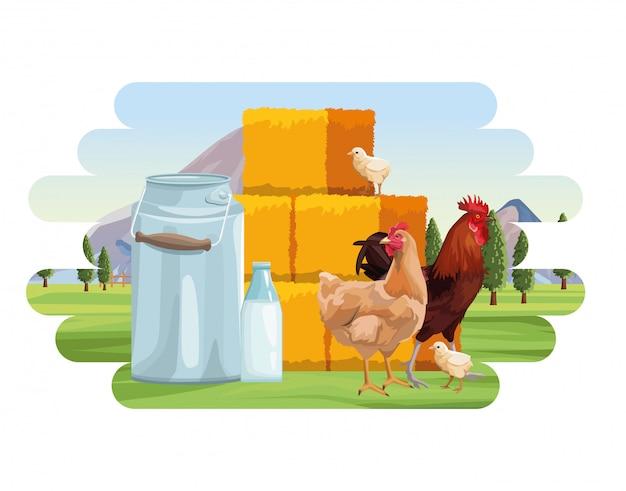 Hodowlane kurczaki kurne i kogut kanister mleko bele siana drzewa ogrodzenie krajobrazu
