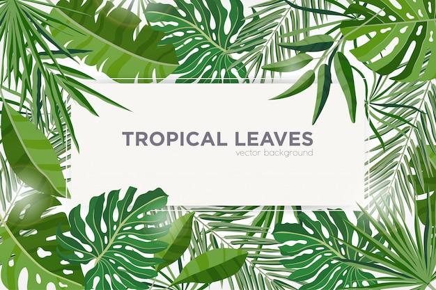 Horyzontalny tło z zielonymi tropikalnymi liśćmi dżungli drzewa. eleganckie tło ozdobione ramą wykonaną z liści egzotycznych roślin. naturalna granica sezonowa. kolorowa ilustracja.