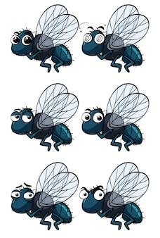 Houseflies z różnych emocji