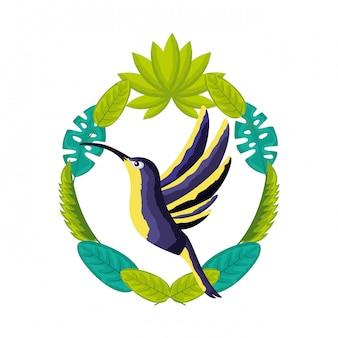 Hummingbird ptak opuszcza tropikalny