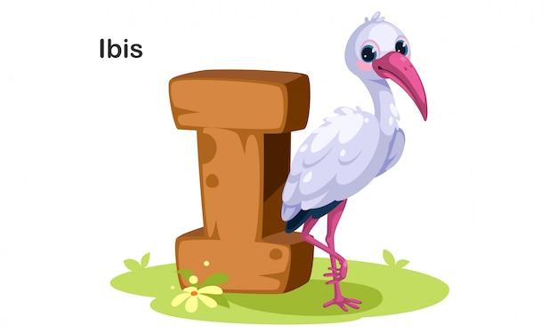 I dla ibis