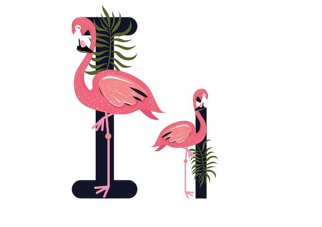 Ii flamingos