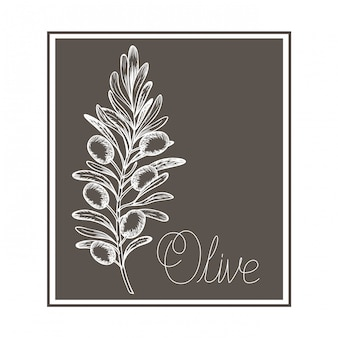 Ikona na białym tle rysunek kwiat oliwny