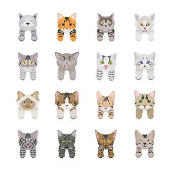 Ikony ładny kot twarze