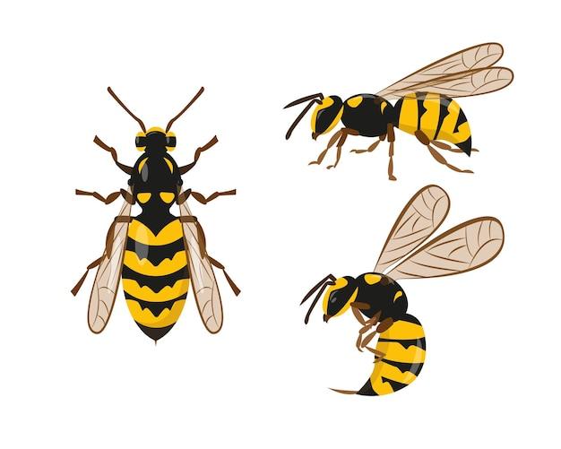 Ikony osy, szerszenia lub pszczoły ustawione na białym tle