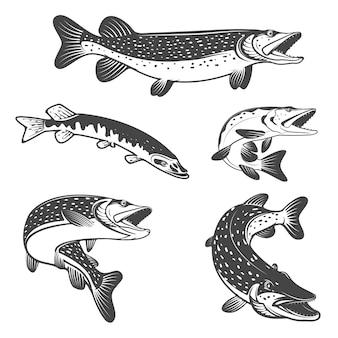 Ikony ryb szczupaka. elementy projektu dla klubu lub zespołu wędkarskiego.