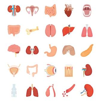 Ikony wewnętrznych narządów ludzkich