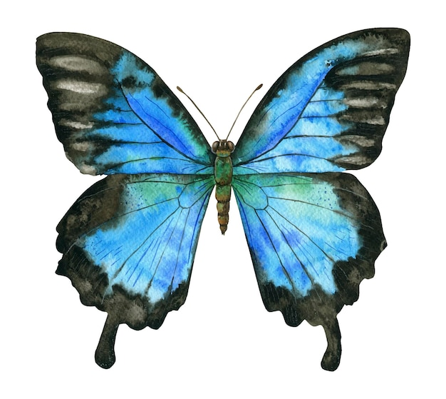 Ilustracja akwarela ciemny niebieski motyl