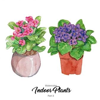 Ilustracja akwarela rośliny domowe