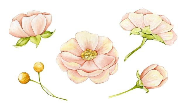 Ilustracja akwarela tropikalne kwiaty