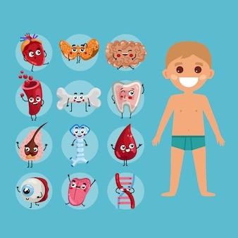 Ilustracja anatomii męskiego ciała z dzieckiem