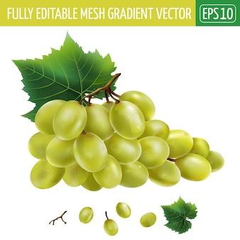 Ilustracja białych winogron