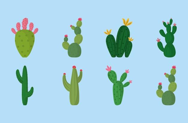 Ilustracja botaniczna dekoracja roślin różnych kaktusów