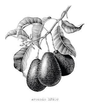 Ilustracja botaniczna gałąź awokado vintage grawerowanie styl czarno-biały clipart na białym tle