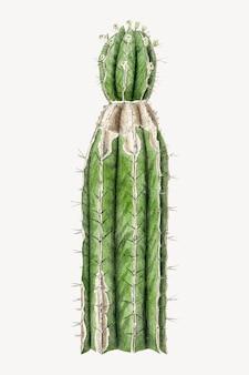Ilustracja botaniczna kaktusa