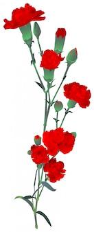 Ilustracja bukiet czerwonych goździków