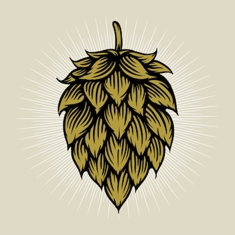 Ilustracja chmielu piwa w stylu grawerowania