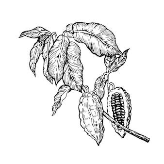 Ilustracja czekoladowe ziarna kakaowego