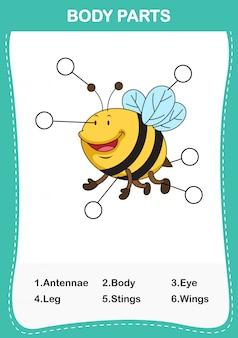 Ilustracja części ciała słownictwa pszczół, napisz poprawną liczbę części ciała
