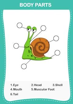 Ilustracja części ciała słownika ślimaka, napisz poprawną liczbę części ciała